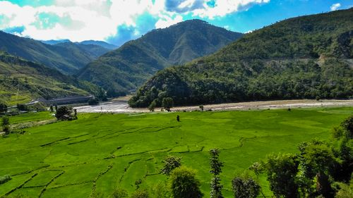 picture,green,rice,field,bhiman,nepal,majestic,greenery,peace,mind