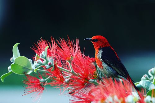 birds,flower,beautiful