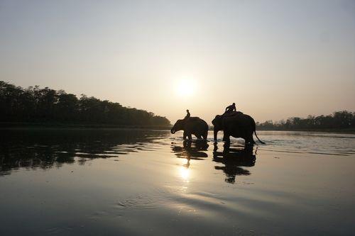 elephants,crossing,rapti,river,chitwan,nationalnepal
