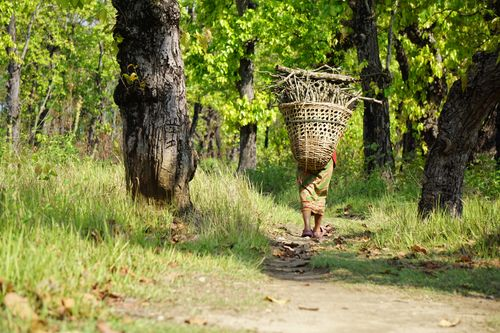 woman,heading,home,collecting,firewood,forest