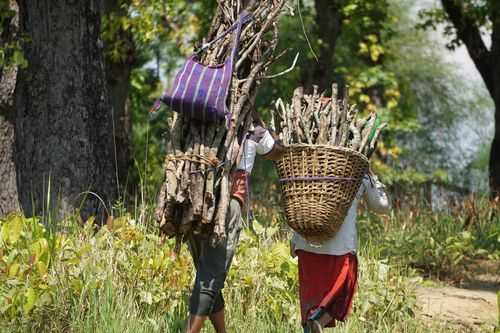 local,villagers,carrying,firewood,nearby,forest
