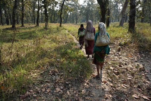 local,women,heading,forest
