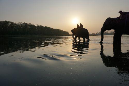 elephants,crossing,rapti,river,chitwan,national,park