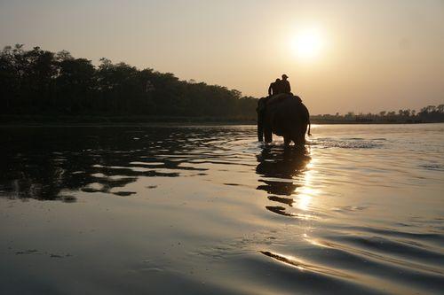 elephant,crossing,rapti,river,chitwan,national,park