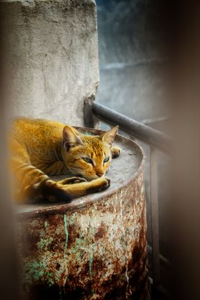 photo,cat,bedroom's,window,years,back,reminds,current,circumstances,pandemic,nature,beautiful,day,humans,enjoy,shows,life,sides,captives,mother,animals,free,world,boundary,walls