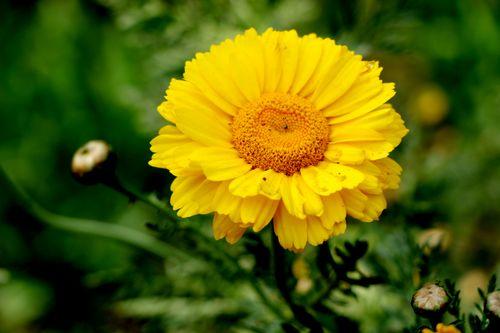godawari#,flower,stock,photo#,nepal_photography,sita,mayashrestha