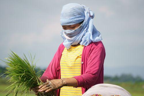 girl,covering,face,scarf,due,covid-19,fear,working,farmland,chitwan,nepal