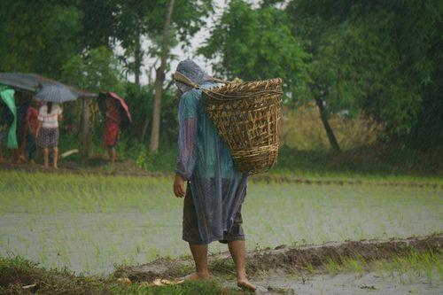 nepali,farmer,wearing,raincoat,carrying,basket,raining