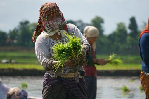 nepali,woman,working,farmland,covering,face,scarfs,due,covid-19,fear,chitwan,nepal