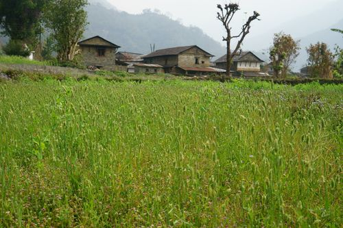 typical,gurung,village,chaura,pokhara,nepal