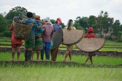 nepali,farmers,walking,home,long,day,hardwork,chitwan,nepal