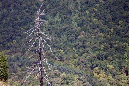 tree,rukum,nepal