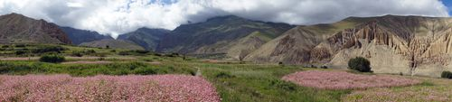 farmland,dhakmar,village,upper,mustang,nepal