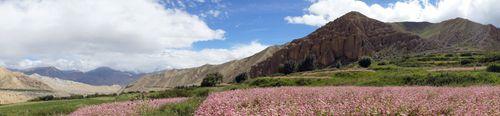 farmland,ghami,village,upper,mustang,nepal