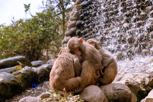 sound,sleep,monkeys,human,made,falls,swayambhunath,nepal,world,heritage,site,declared,unesco