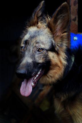 dog,images#,stock,image#,nepal,_photography,sita,maya,shrestha