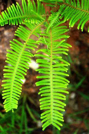 nature,leaf,images#,stock,image#,nepal,_photography,sita,maya,shrestha