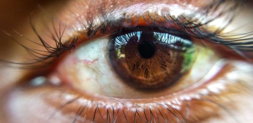 close,shot,human,eye