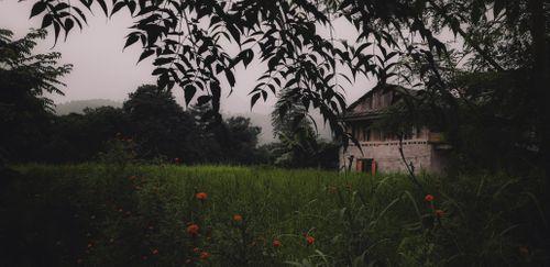 picture,small,house,alongside,field,dandelion,flowers,minimum/maximum,property,nepali,villagers