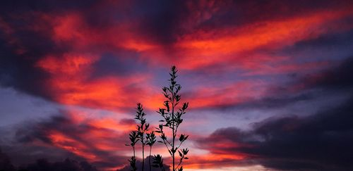 minimal,picture,silhouette,plant,bright,red,cloudy,sky