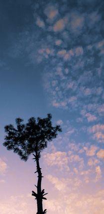minimalistic,picture,tree,beautiful,sky