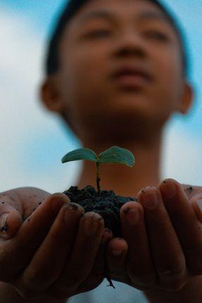 hand,holding,plant