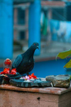 pigeon,sitting,wall