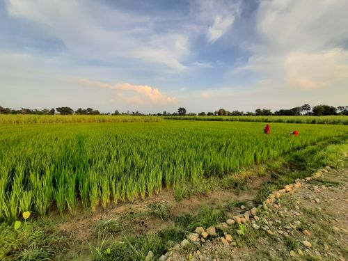 paddyfield,captured,camere