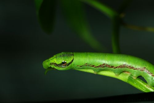 close,caterpillar,|stock,image#,nepal,photography,sita,maya,shrestha