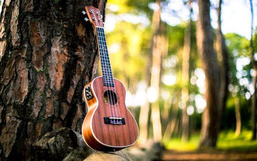 musical,instrument,ukulele,park,kathmandunepal