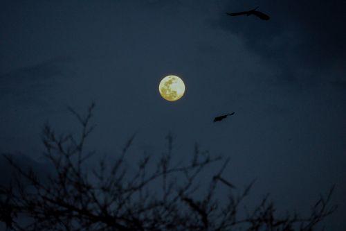 super,full,moon,appeared,dark,skynepal,month,755pm