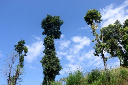 beautiful,trees,blue,sky,clouds,background#stock,image,#nepalphotographybysitamayashrestha