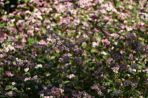 fafar,flower#stock,image,nepal,photographyby,sita,maya,shrestha
