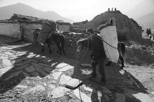 daily,life,syang,village,mustang,nepal