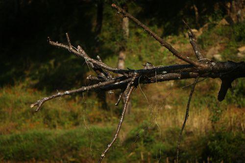 tree,/sindhupalchokbigal,/nepal,#stockimage,#nepalphotographybysitamayashrestha
