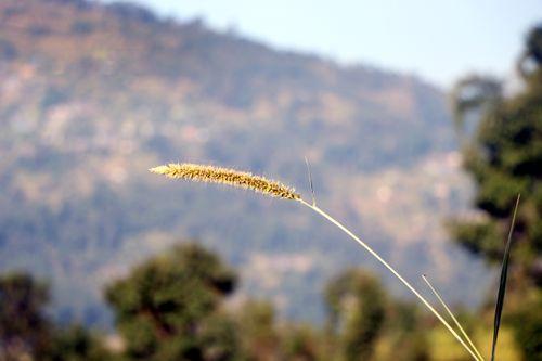 sindhupalchokbigal,/nepal,#stockimage,#nepalphotographybysitamayashrestha