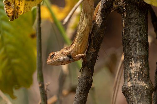 lizard,branch,tree,enjoying,sun,searching,food
