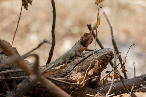 lizard,branch,tree,enjoying,shade