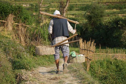farmer,heading,long,day,work,khokana,nepal
