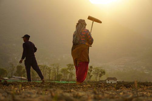 farmers,working,farmland,khokhana,nepal