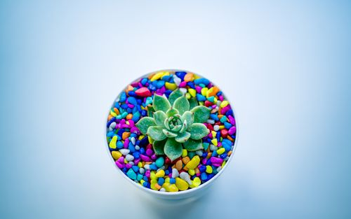 indoor,plant,decoration,colorful,stone