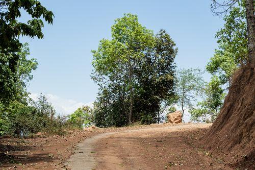 single,tree,shreenagar,tansen,palpa,nepal