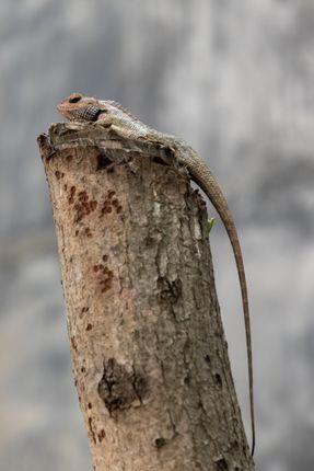 lizard,top,branch,tree,searching,prey,enjoying,surrounding,view