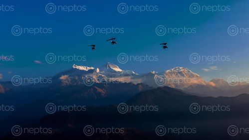 Find  the Image Flying,ultralight,over,the,Mount,Annapurna,range,,Pokhara,,Nepal and other Royalty Free Stock Images of Nepal in the Neptos collection.