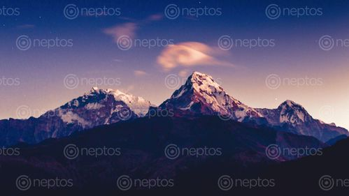 Find  the Image Mount,Annapurna,South,range,,Poonhill,,Nepal and other Royalty Free Stock Images of Nepal in the Neptos collection.