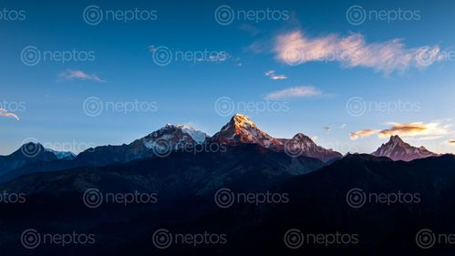 Find  the Image mount,annapurna,south,range,photo,poonhill,trek,nepal  and other Royalty Free Stock Images of Nepal in the Neptos collection.