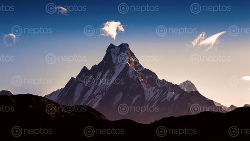 Find  the Image shining,mount,fishtail,image,poonhill,trek,nepal  and other Royalty Free Stock Images of Nepal in the Neptos collection.