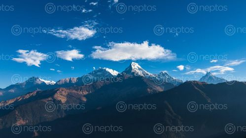 Find  the Image annapurna,south,range,photo,trek,poonhill,nepal  and other Royalty Free Stock Images of Nepal in the Neptos collection.