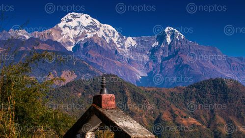 Find  the Image mount,annapurna,south,hiunchuli,photo,ghandruk,trek,nepal  and other Royalty Free Stock Images of Nepal in the Neptos collection.