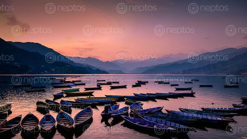 Find  the Image Gloomy,Sunset,and,parking,colorfull,boats,at,Phewa,Lake,,Pokhara,,Nepal and other Royalty Free Stock Images of Nepal in the Neptos collection.